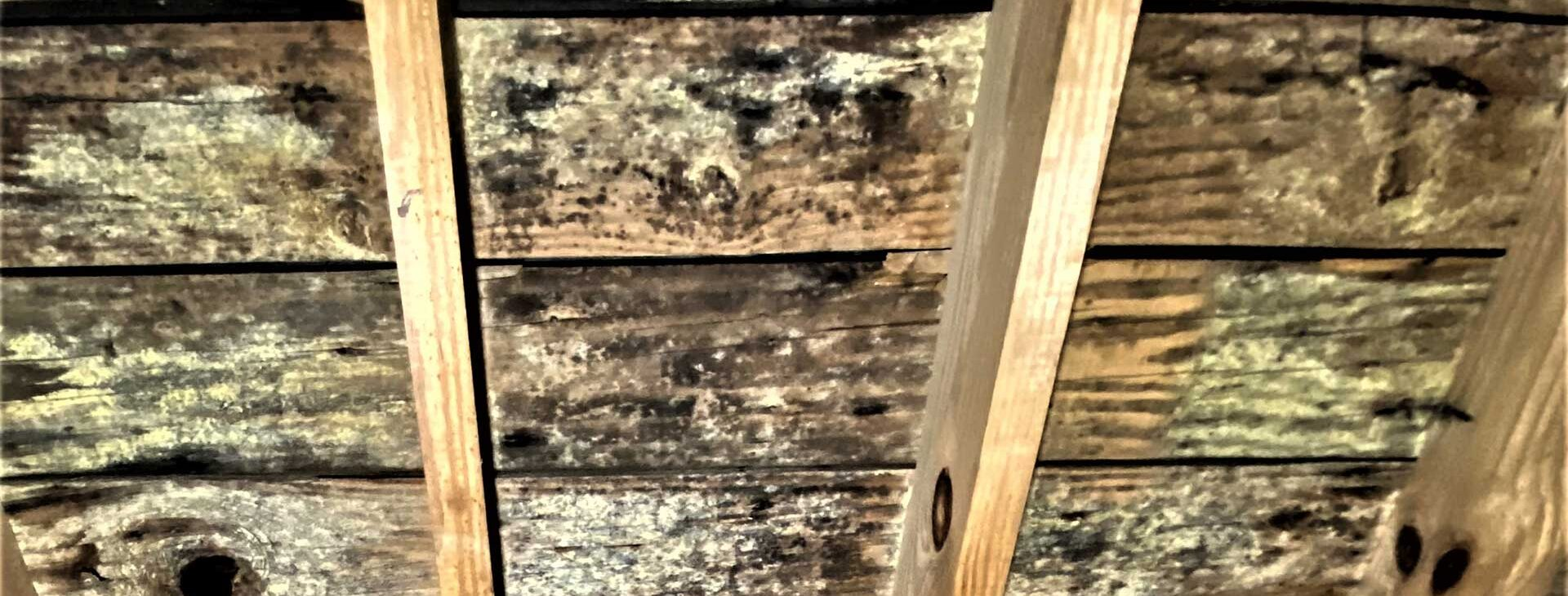 Before Attic Mold Remediation